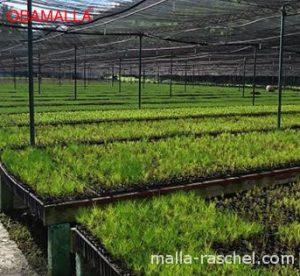 Casa sombra para producción de plantula.