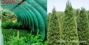 Viveros con malla Raschel para plantas forestales