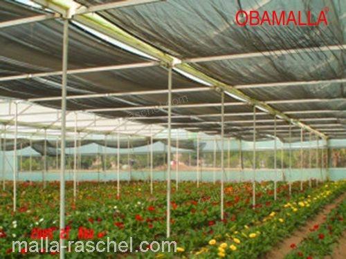 OBAMALLA también es ideal en el culturo de flores