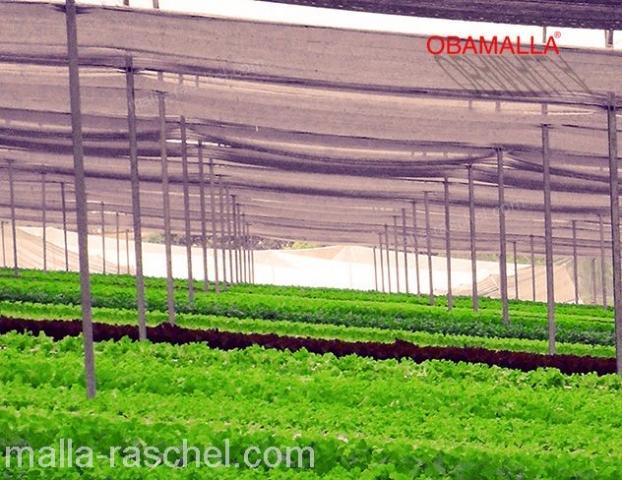 protección de cultivos en casa sombra con OBAMALLA